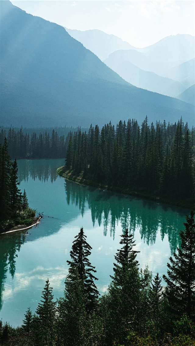 body of water and pine trees iPhone 8 wallpaper
