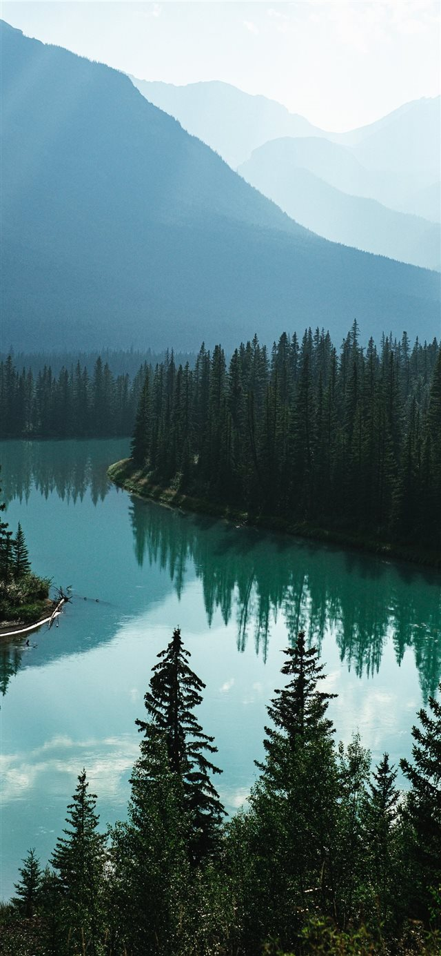 body of water and pine trees iPhone X wallpaper