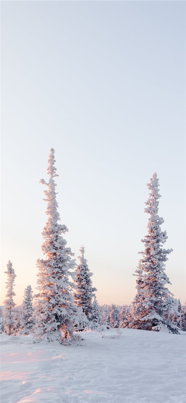 green pine trees on snow covered mountain during d... iPhone 11 wallpaper