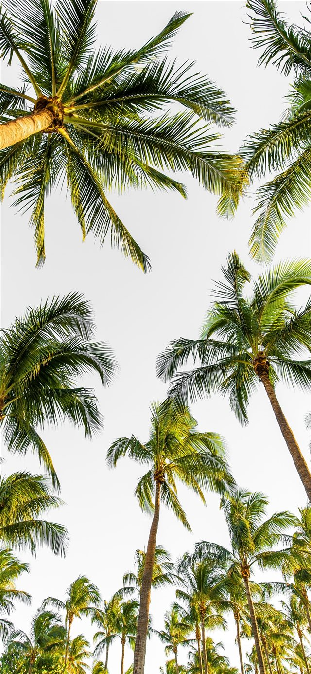 low angle photography of palm trees iPhone 11 wallpaper