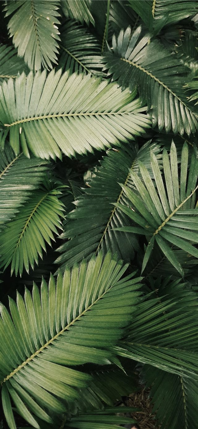 palm leaves iPhone X wallpaper