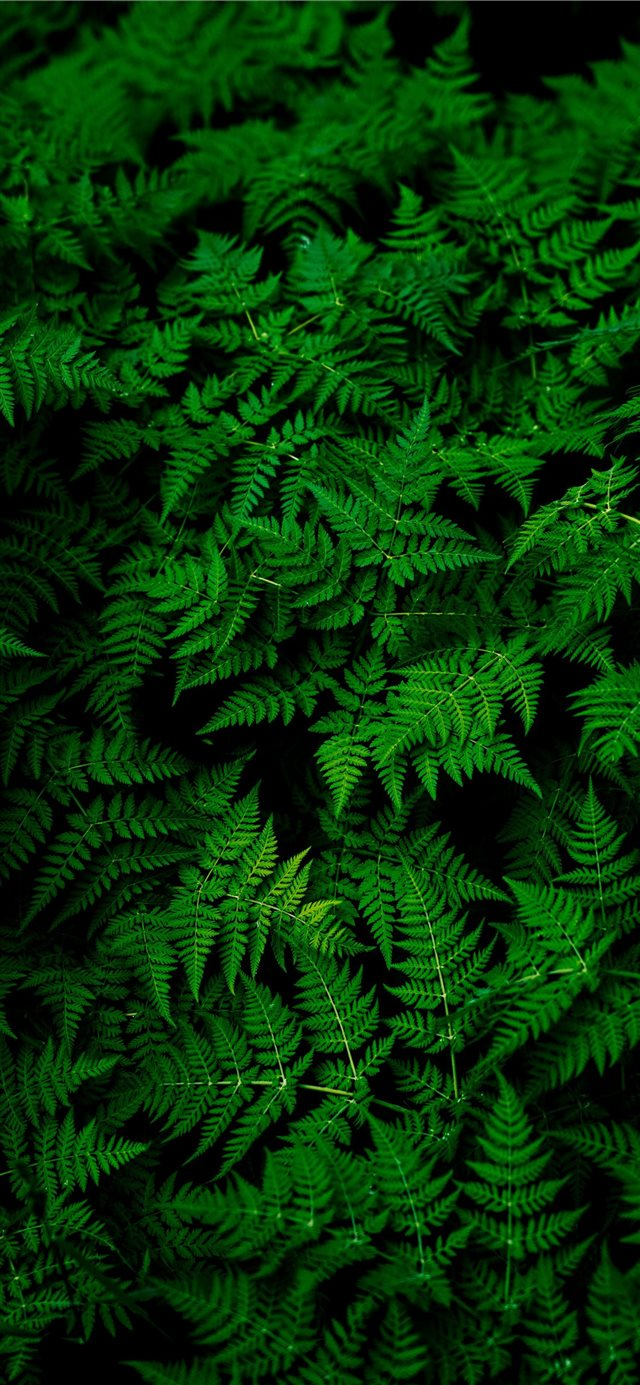 photo of green fern plant iPhone X wallpaper
