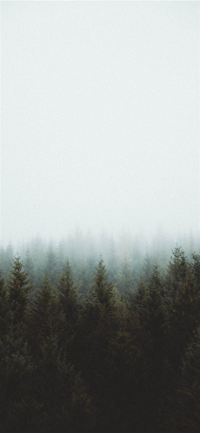 photo of pine trees iPhone 11 wallpaper