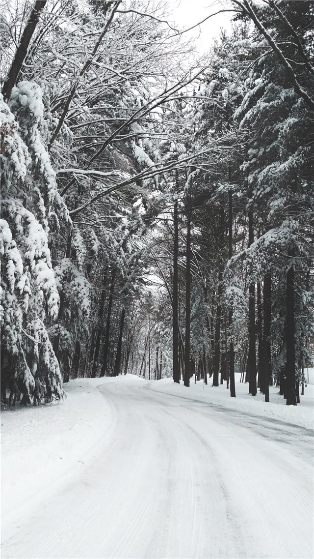 road surrounded by trees during winter iPhone SE wallpaper