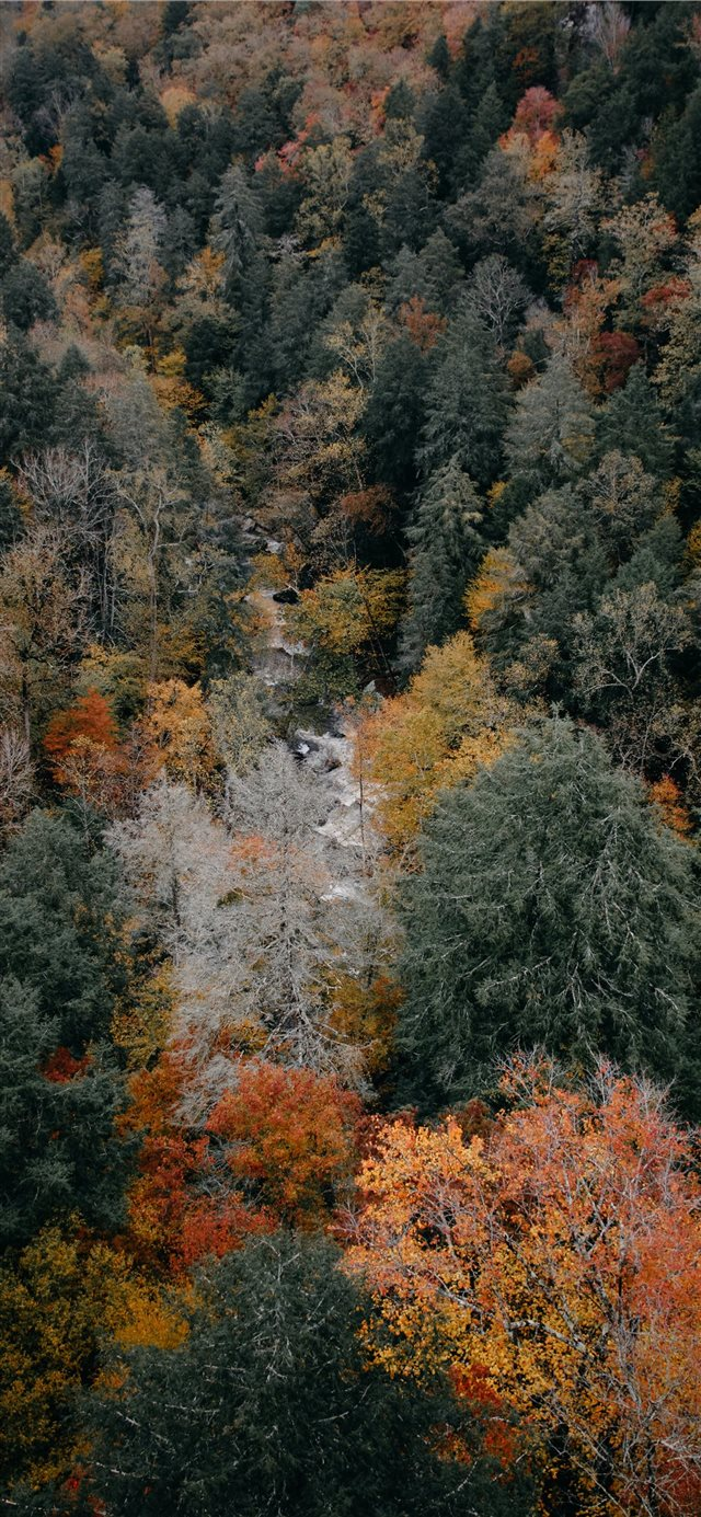 aerial photography of woods iPhone 11 wallpaper