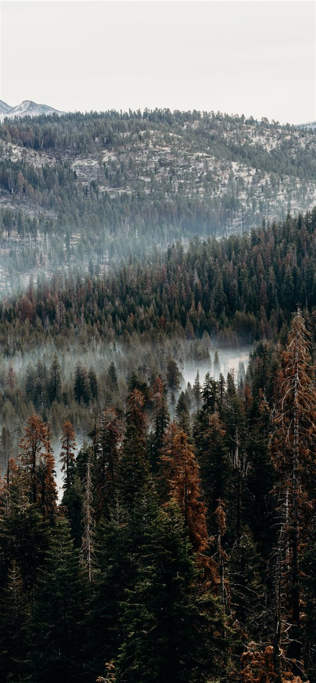 aerial view of pine trees iPhone X wallpaper