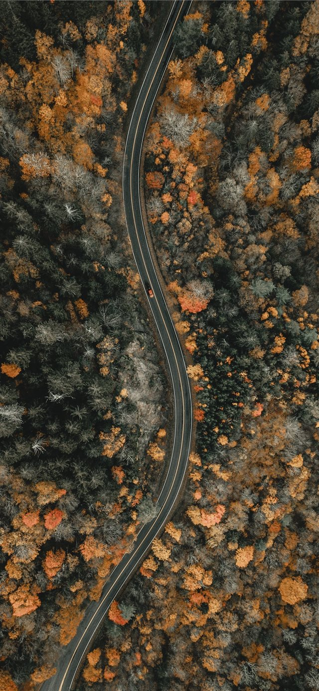 aerial view of trees during daytime iPhone X wallpaper