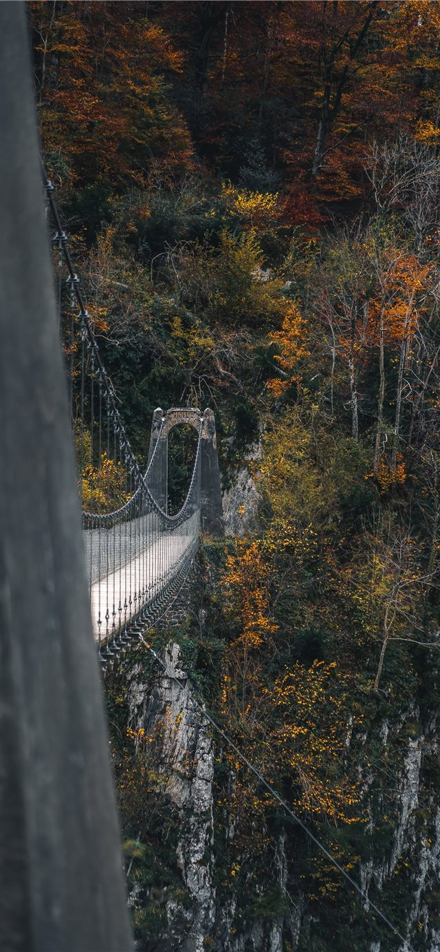 bridge near trees during daytime iPhone X wallpaper