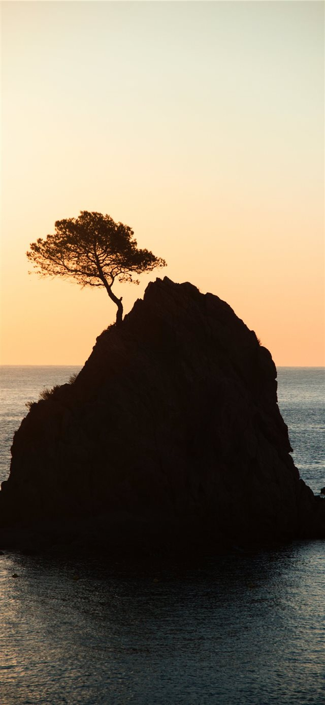 brown rock formation with tree under white sky dur... iPhone X wallpaper