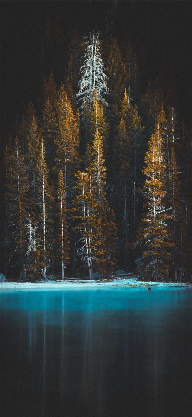 green pine tress and body of water iPhone 11 wallpaper
