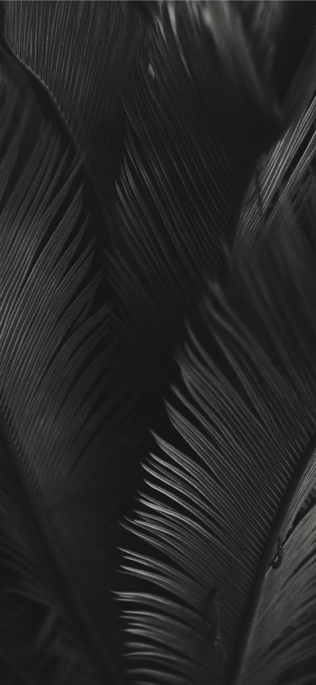 palm tree iPhone X wallpaper