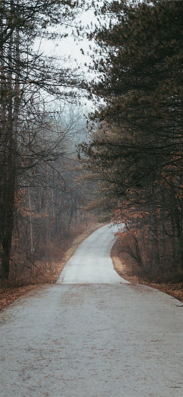 road in between tree during daytime iPhone X wallpaper