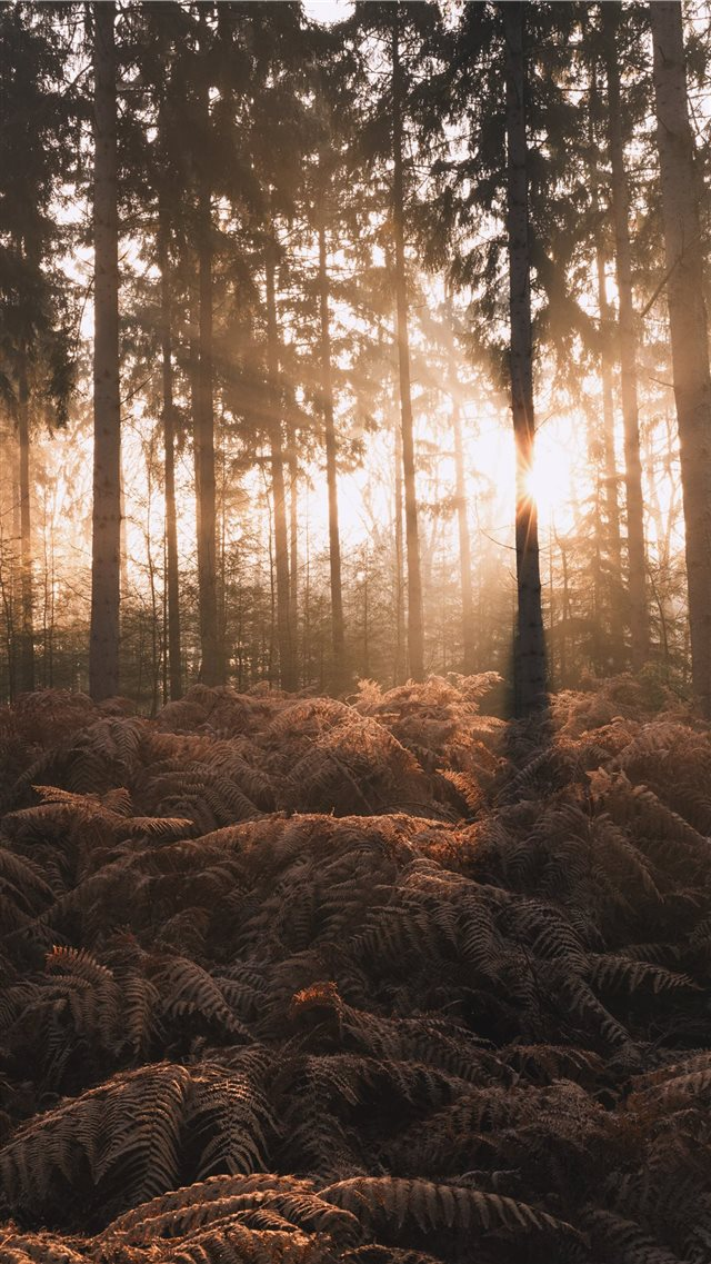 silhouette of ferns plants and pine trees iPhone SE wallpaper