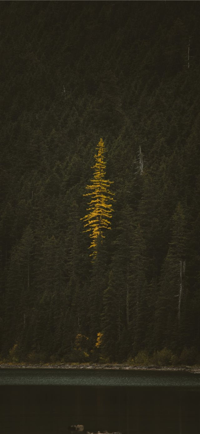 tree near body of water iPhone X wallpaper