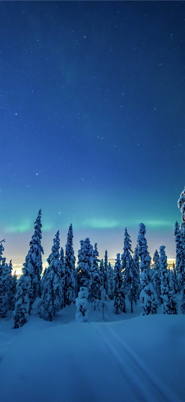 trees covered by white snow during daytime iPhone X wallpaper