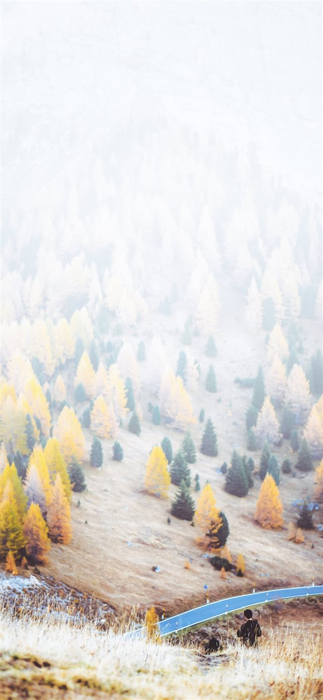 trees during daytime iPhone X wallpaper