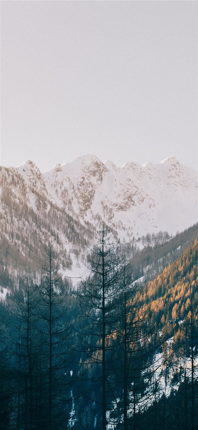trees near mountain iPhone 11 wallpaper
