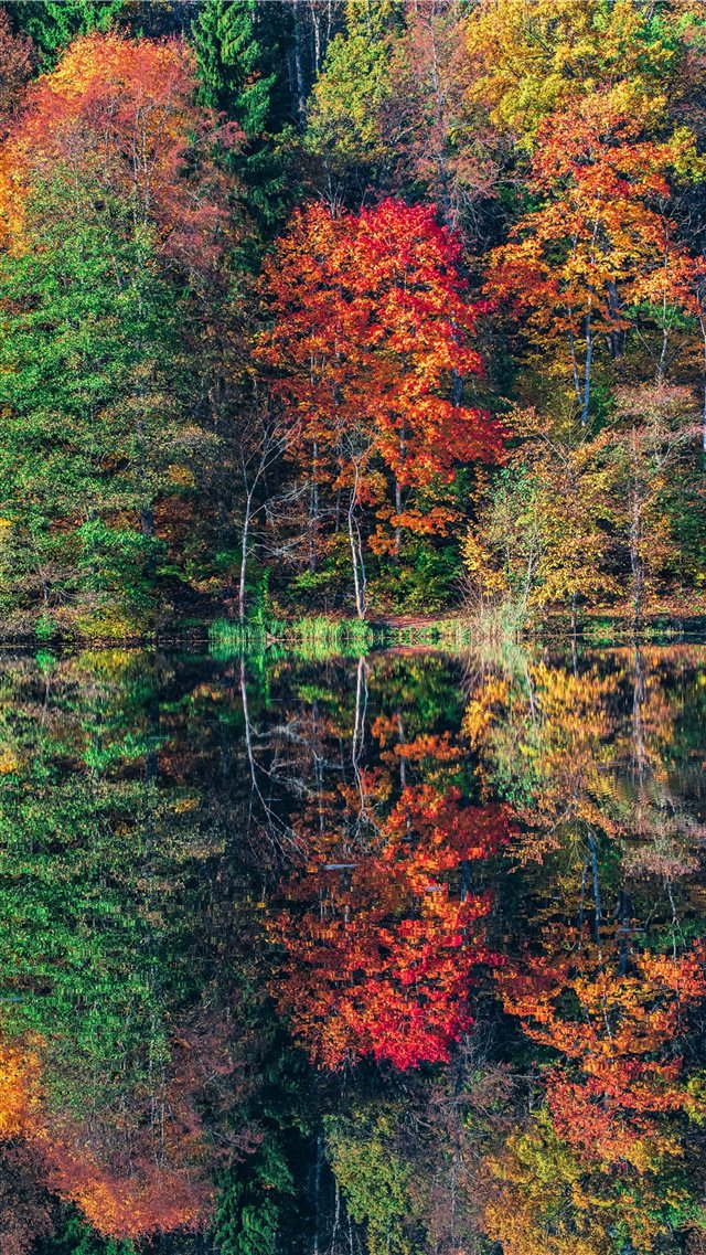 view of trees iPhone 8 wallpaper
