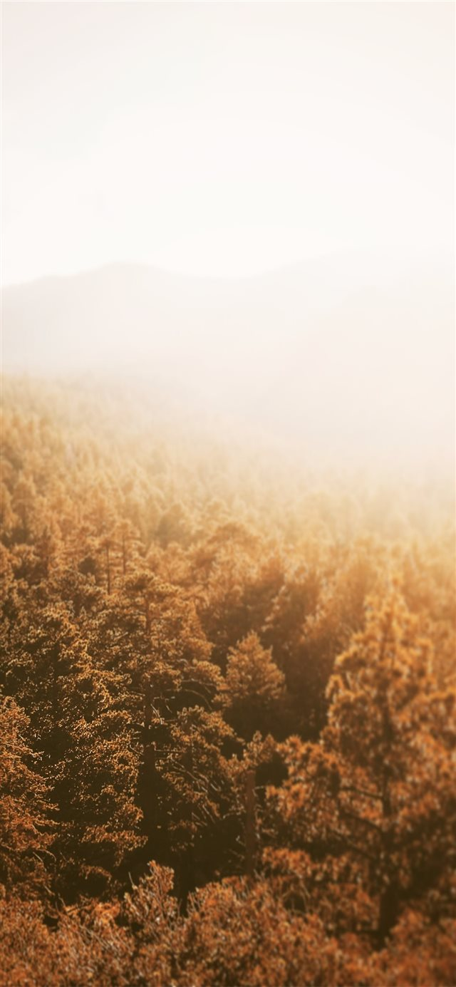 aerial photography of forest during golden hour iPhone 11 wallpaper