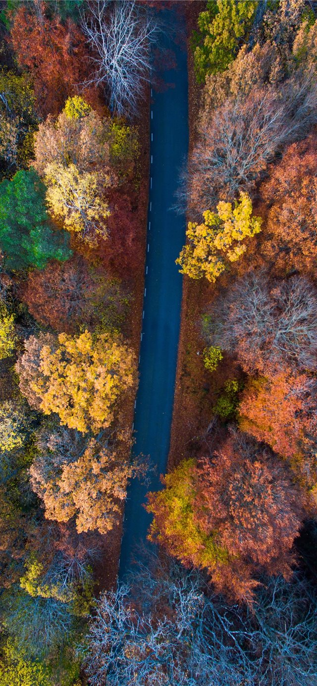 aerial photography of road surrounded with orange ... iPhone X wallpaper