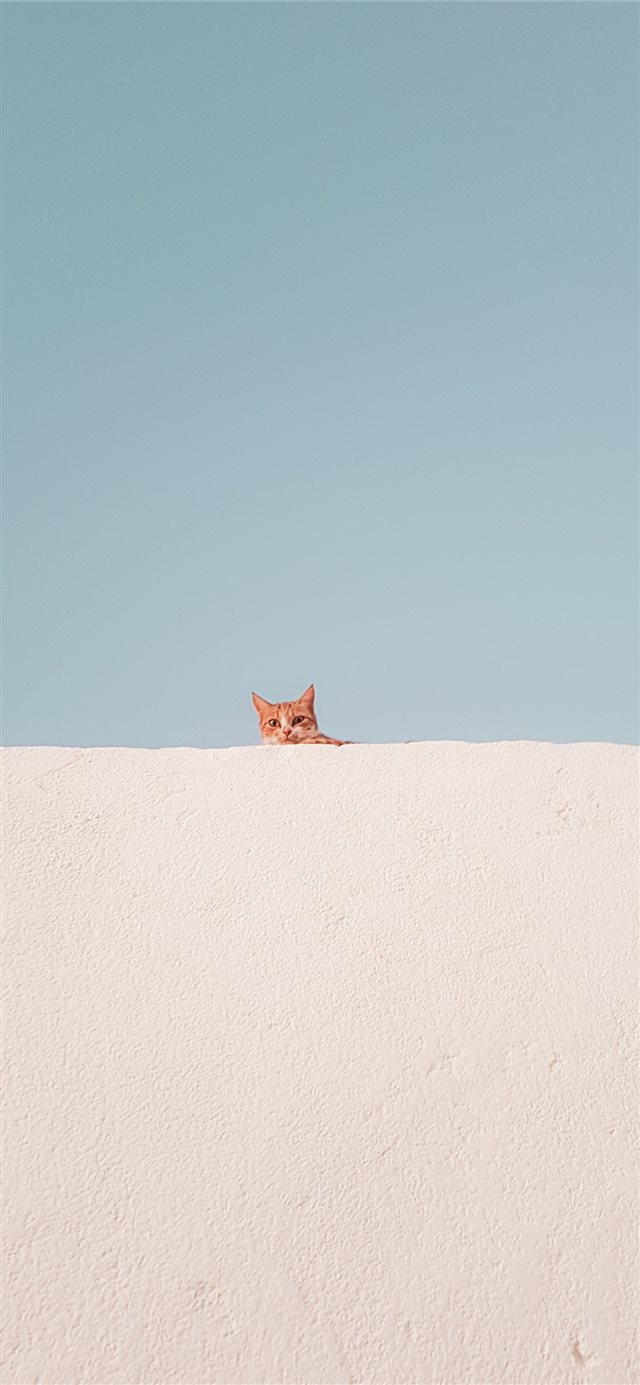 brown tabby cat on concrete roof during daytime iPhone X wallpaper
