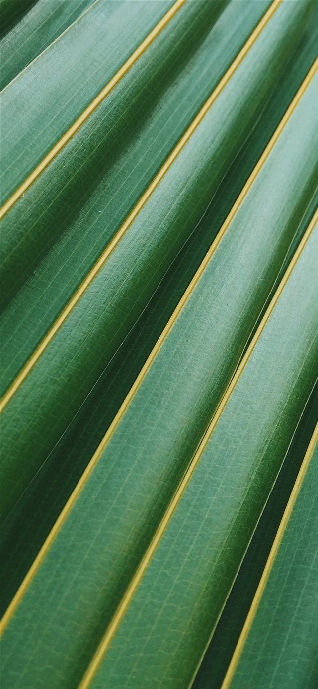 coconut leaf iPhone 11 wallpaper
