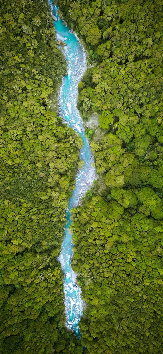 river between trees on daytime iPhone 11 wallpaper