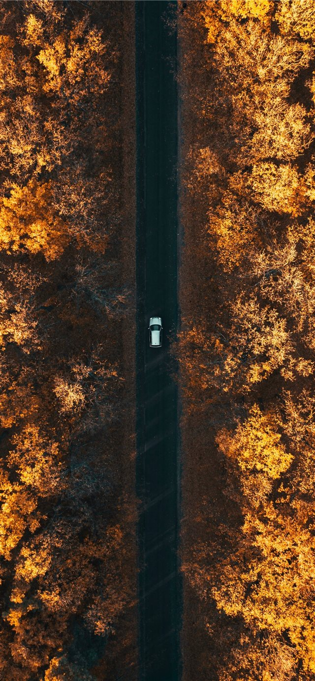 aerial photography of car in forest iPhone 11 wallpaper