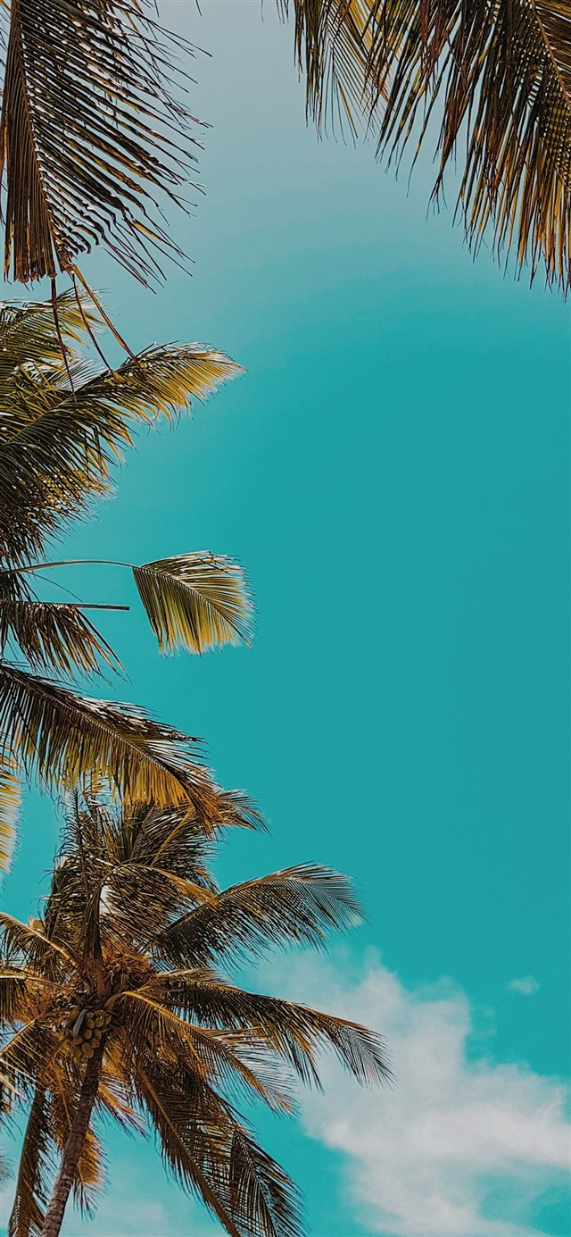 Apple ob59 summer tree palm nature iPhone X wallpaper