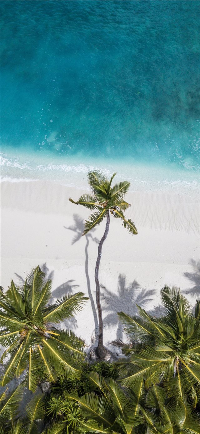 coconut trees near shore iPhone 11 wallpaper