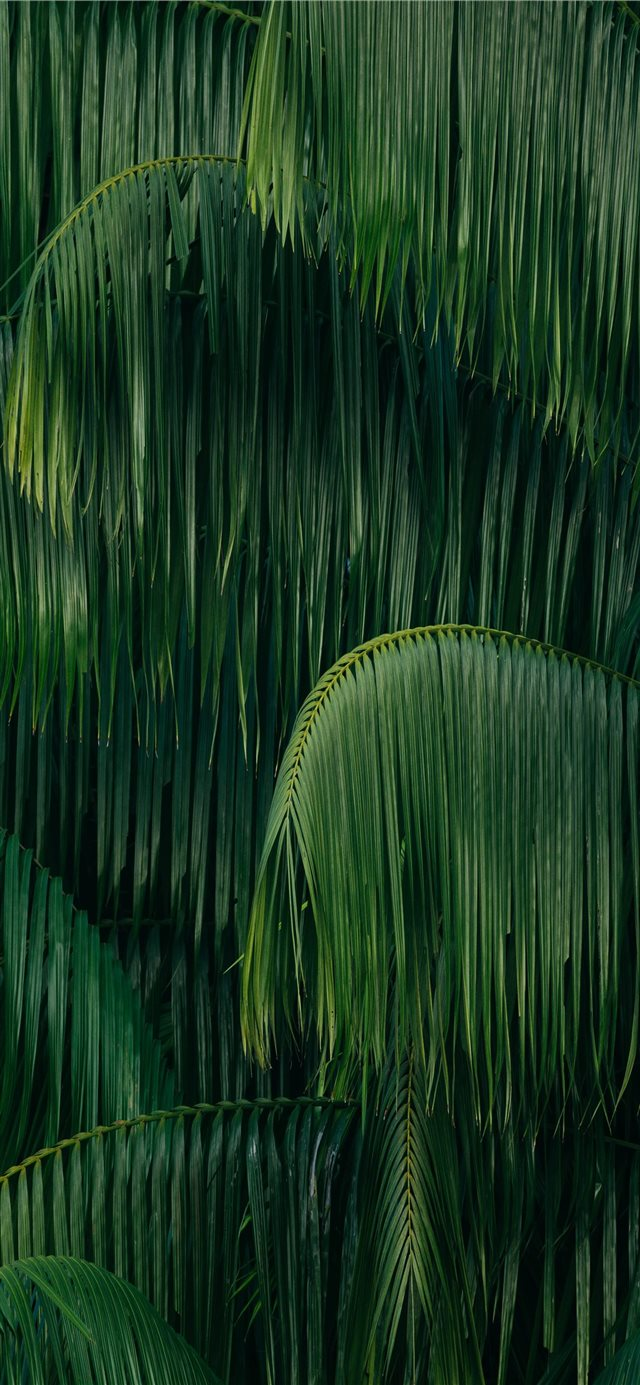 green coconut trees iPhone 11 wallpaper