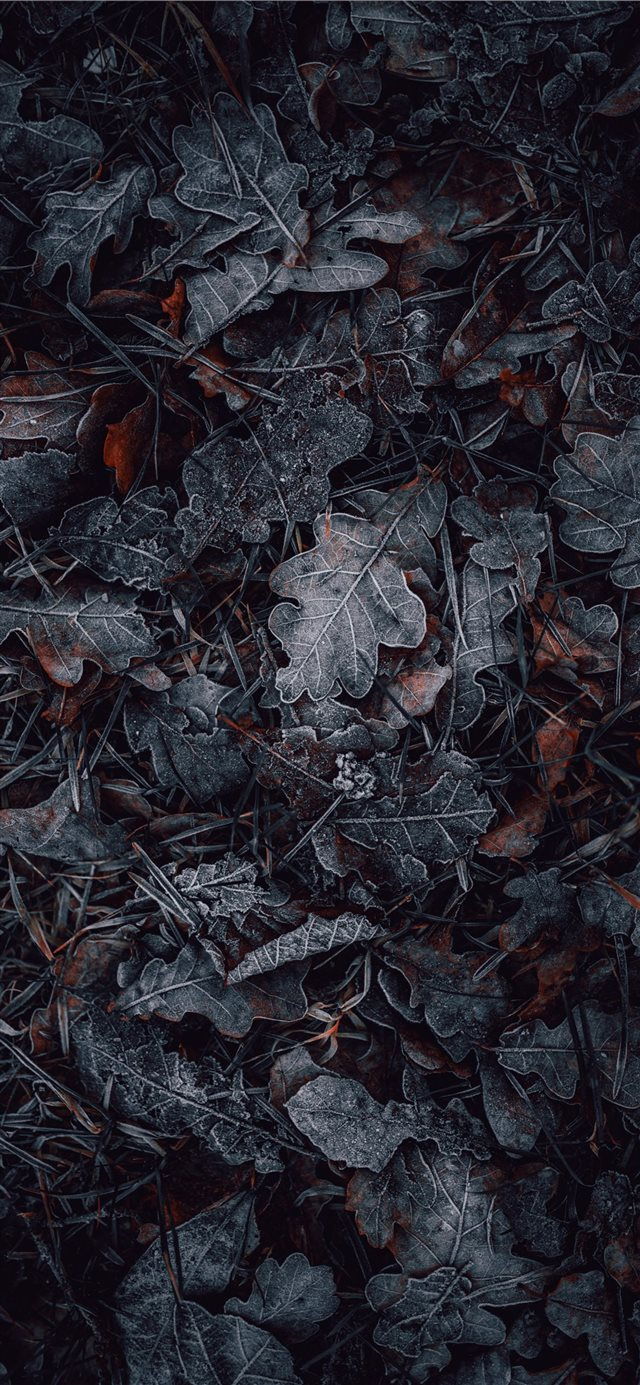 macro photography of gray and brown leaves iPhone X wallpaper