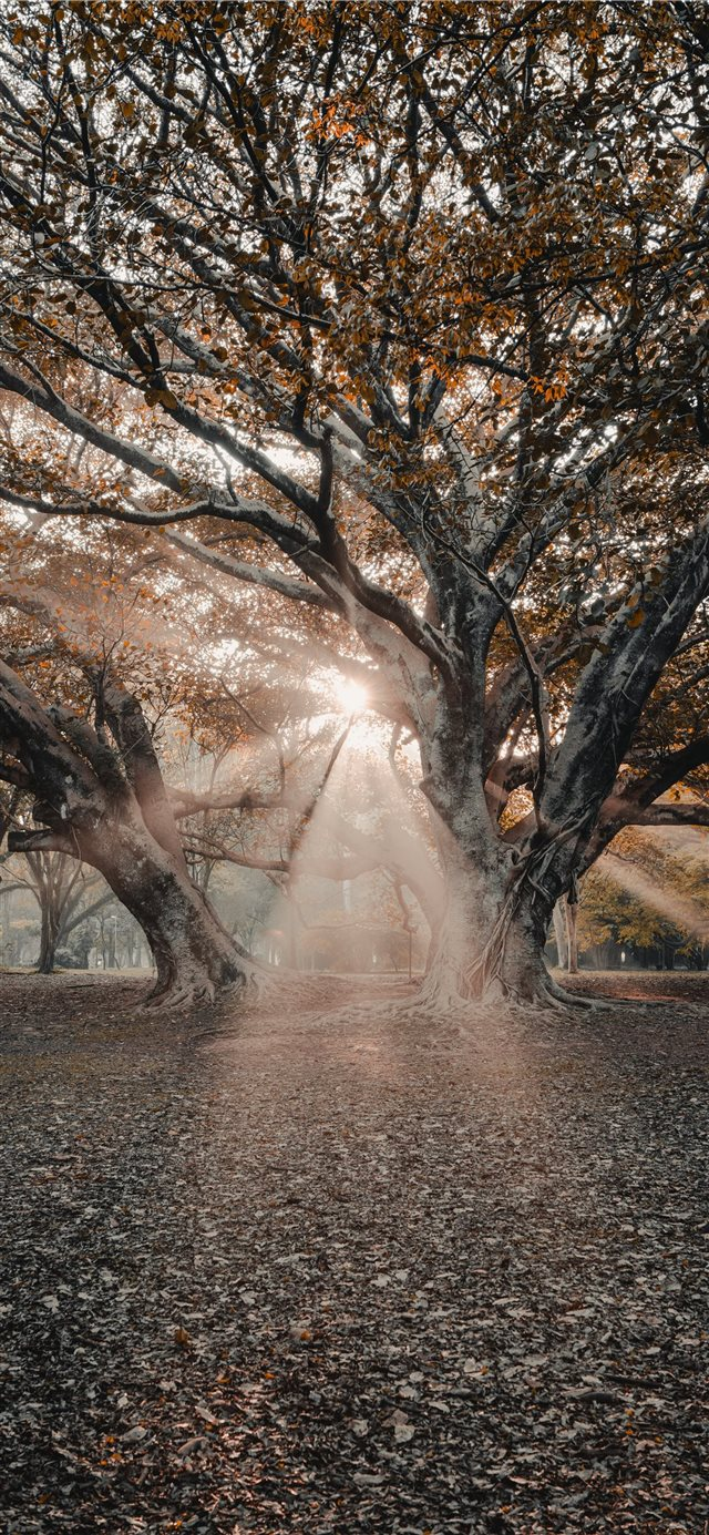 sunlight passing through tree branches iPhone X wallpaper