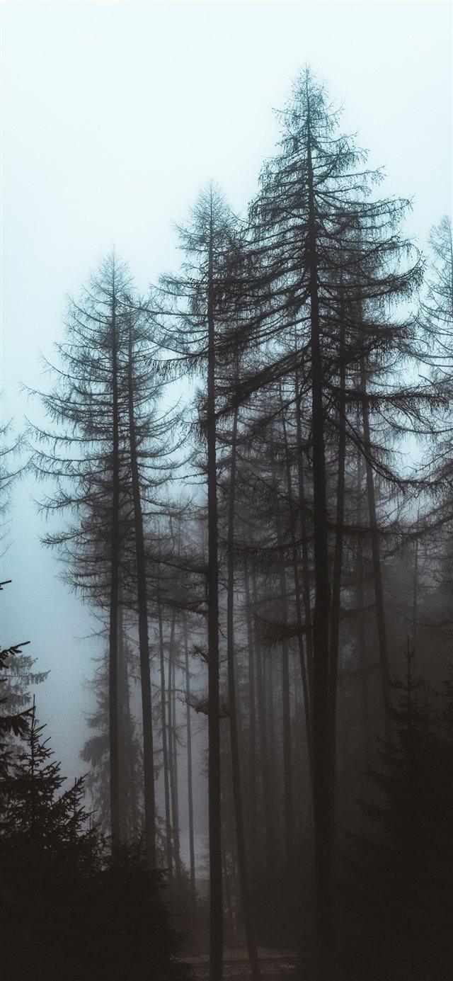 trees during day iPhone 11 wallpaper