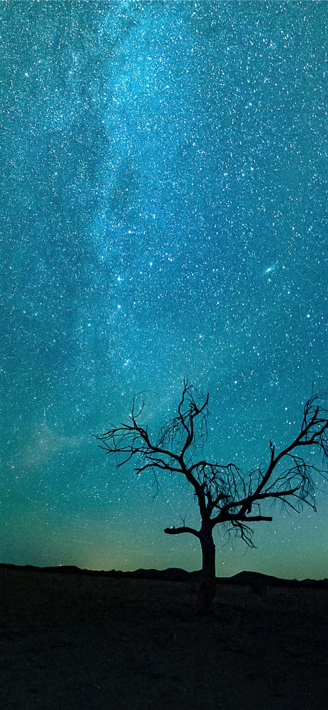 bare tree under starry night iPhone 11 wallpaper