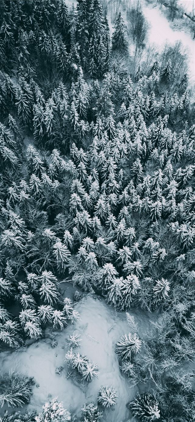 bird's eye view of trees iPhone X wallpaper