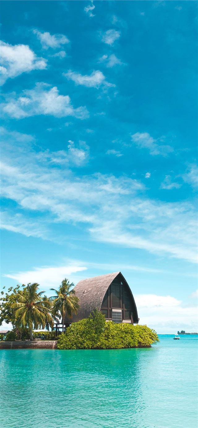 brown hut near coconut palm trees under blue sky iPhone 11 wallpaper