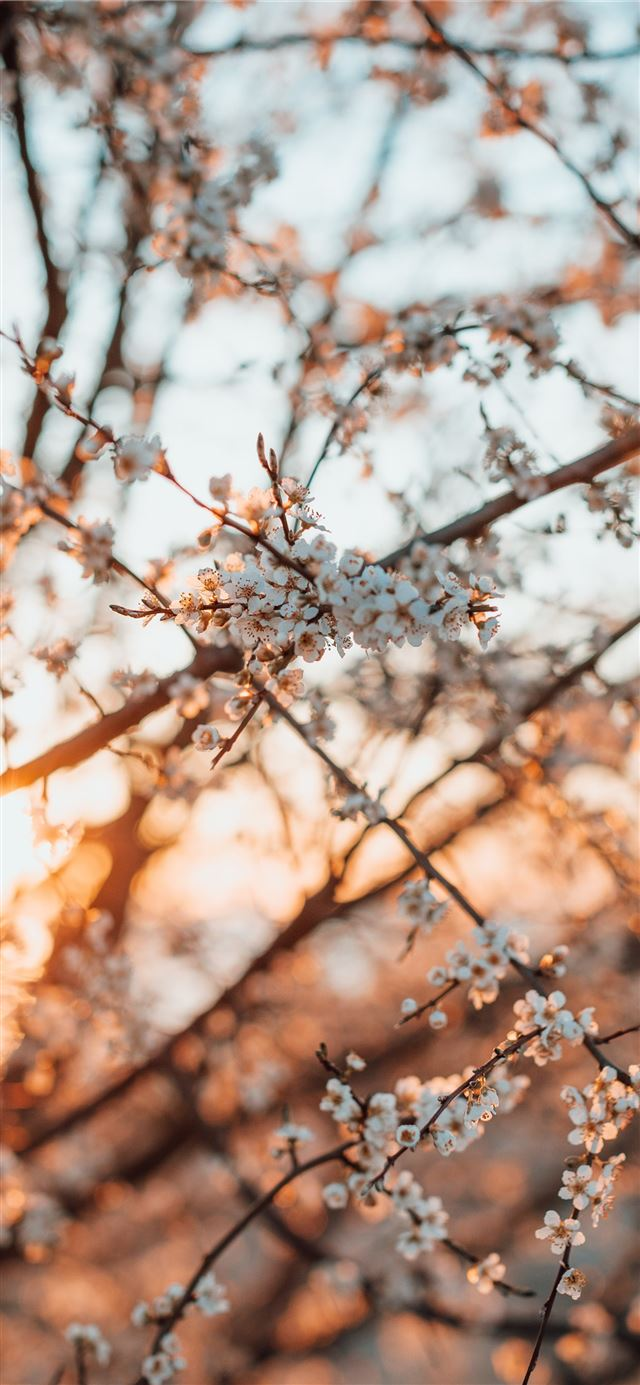 brown tree branch in tilt shift lens iPhone X wallpaper