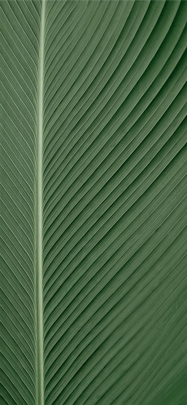green and white striped textile iPhone X wallpaper