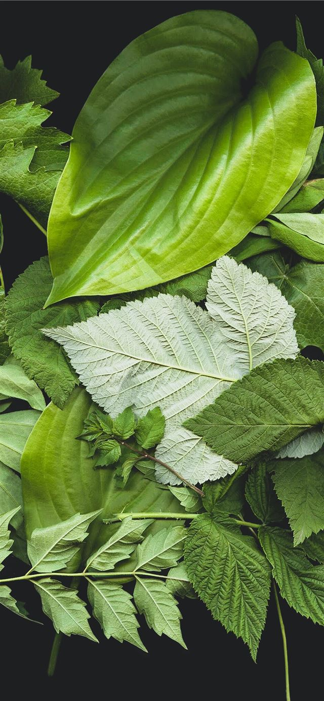 green leaf plants iPhone 11 wallpaper