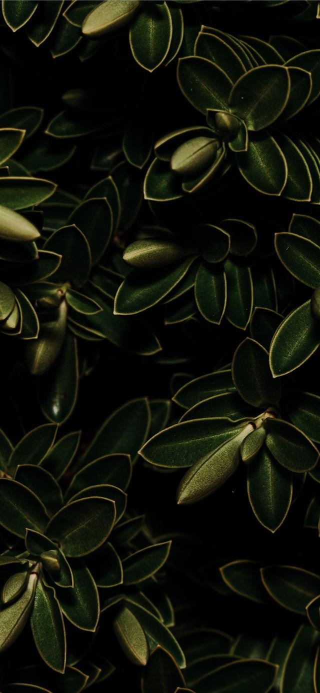 green leafed plant iPhone 11 wallpaper