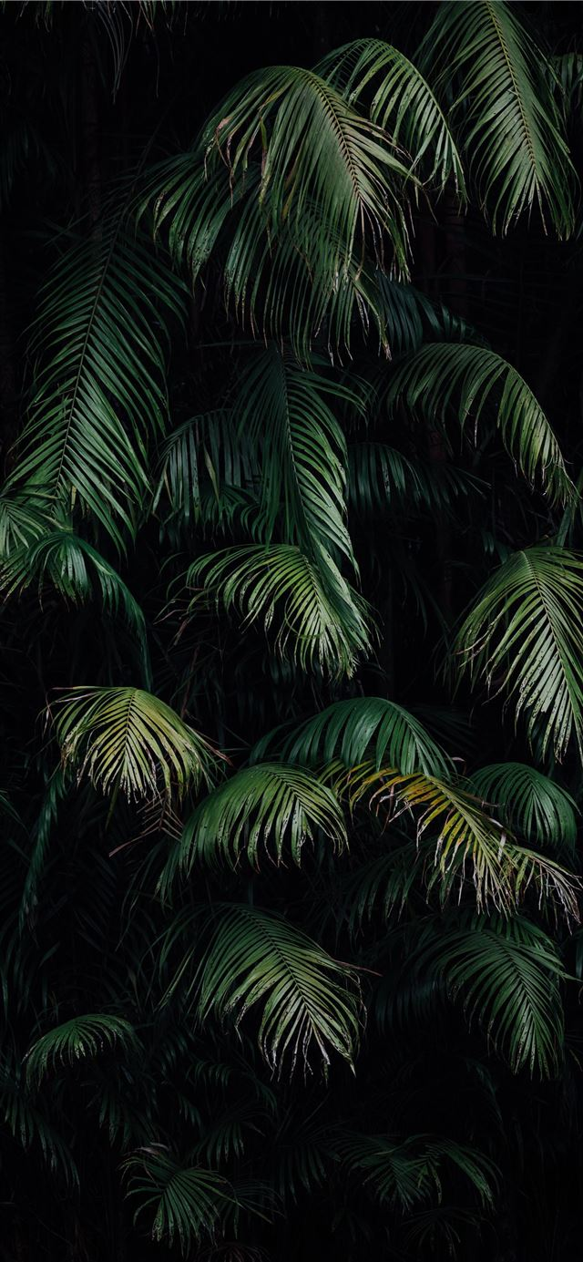 green palm tree during night time iPhone X wallpaper