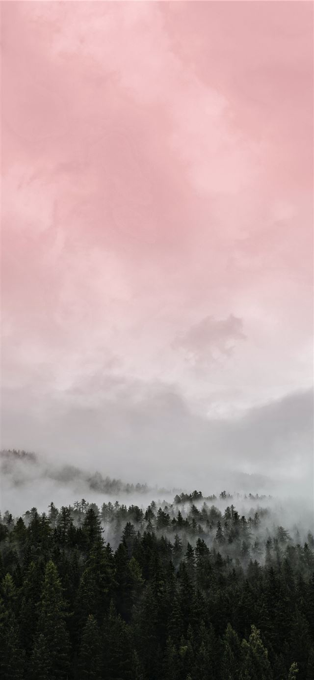 green trees under white clouds during daytime iPhone X wallpaper