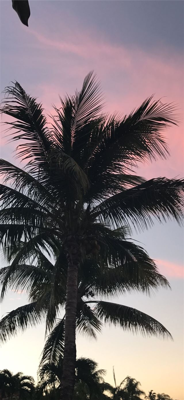 Palm tree iPhone 11 wallpaper