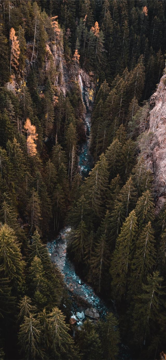 river traversing forest during daytime iPhone 11 wallpaper
