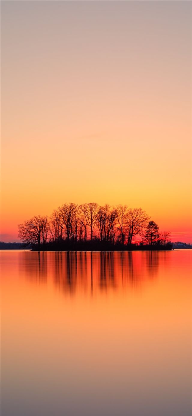 silhouette of trees near body of water during suns... iPhone X wallpaper