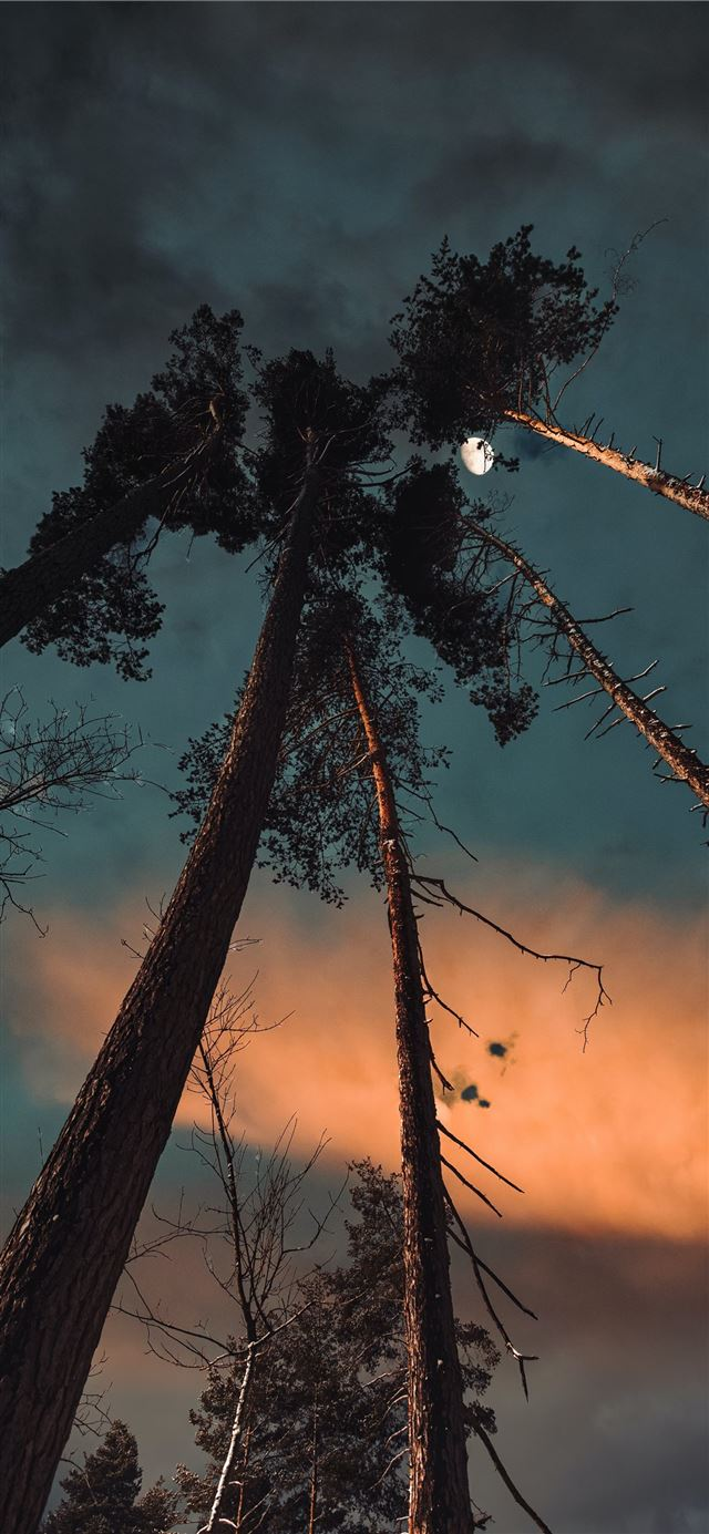 silhouette of trees under cloudy sky during sunset iPhone 11 wallpaper