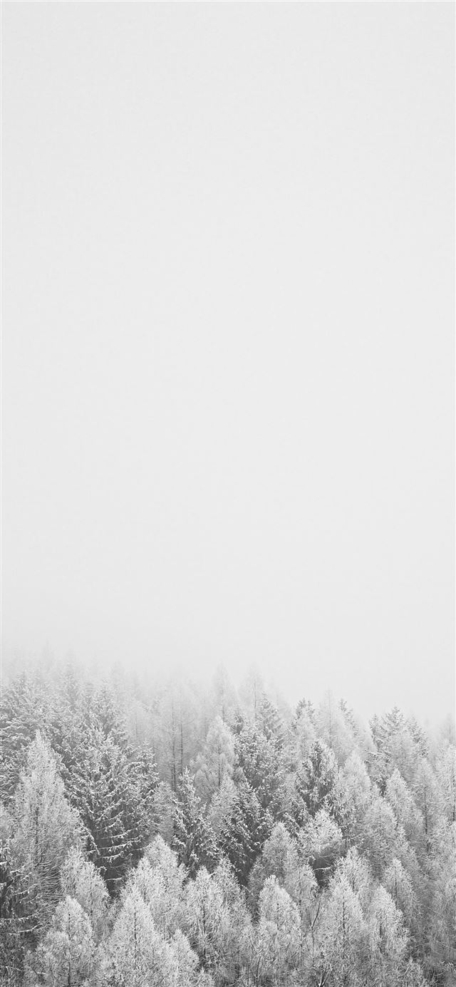 snow covered trees during daytime iPhone 11 wallpaper