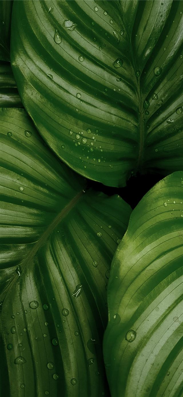 water droplets on green leaves iPhone X wallpaper