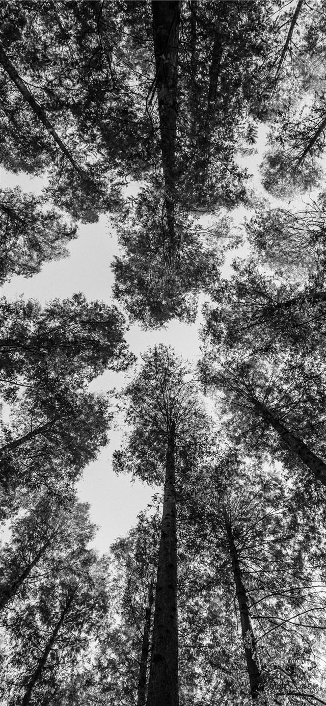 worm view photography of trees iPhone 11 wallpaper